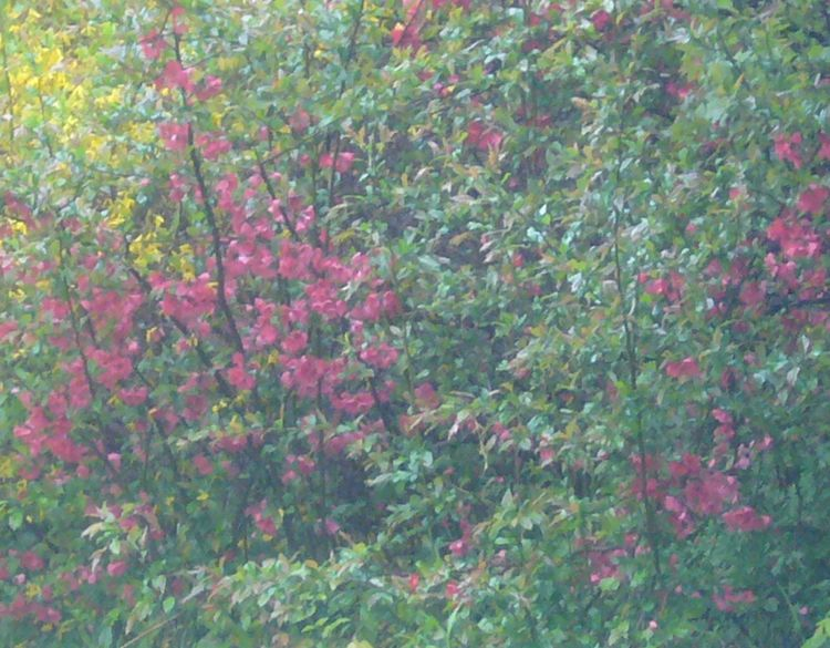 R3 red bush 2 mid may.jpg