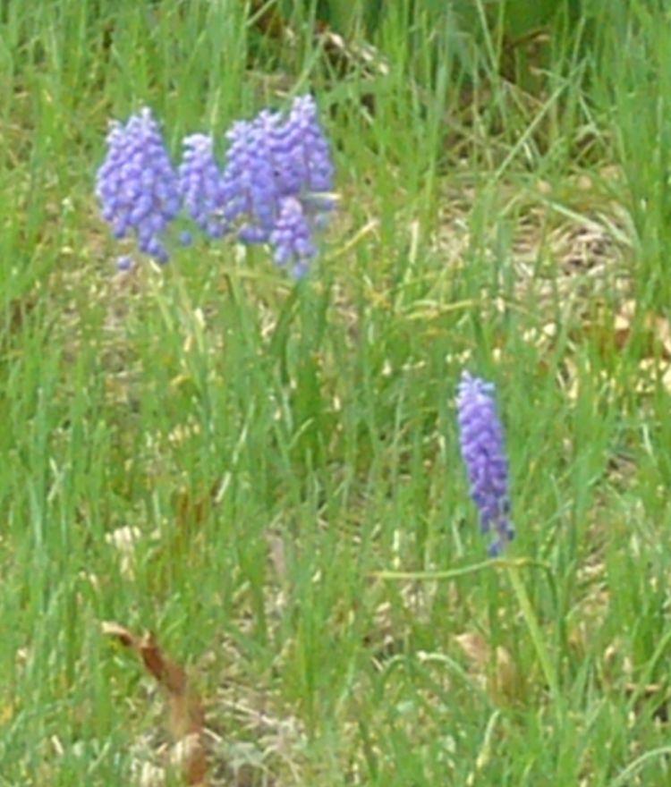 Early Blooming Plants Portal Mkrd Info Wiki
